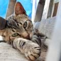 猫がずっとついてくるのは何で?理由とついて回るストーカー猫動画