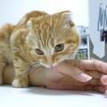 突然ガブ!なでなで中に猫が噛む気持ちとは?噛み癖を治す3つの方法