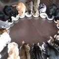 【基本】猫の餌の適正量とは?体重別に動画で分かりやすく解説