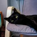 気づいて!日常に潜む猫のストレス 15種類の原因別【対処法】