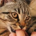 仲良く暮らすために!猫がなつかないときに見直す8つの行動