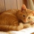 【毛色別に見る猫の性格】茶トラは甘えん坊で元気いっぱい!